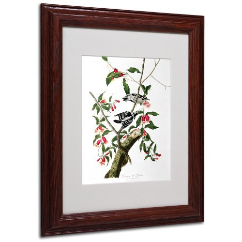 trademark-fine-art-downy-woodpecker-matted-artwork-by-john-james-audubon-with-wood-frame-11-by-14-in