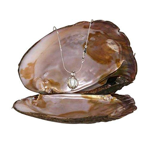 Halskette Fantaisie zu Perle echte in Auster im Käfig Schlangenband C Modeschmuck nicht teuer Anhänger