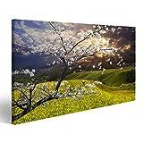 islandburner Bild Bilder auf Leinwand Blüten Mandelblüte