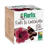 Flortis Plantcube - Fiori di Cioccolato