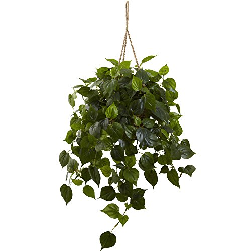 Fast natur 6853Philodendron Hanging Basket, UV-beständig