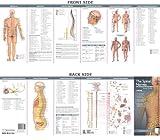 Nervos Spinales y el Sistema Autónomo Nervoso: Guía de Estudio (Anatomical Chart Company Ilustrated Pocket Anatomy)