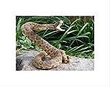 RATTLE SNAKE REPTILE VENOM ATTACK BLACK FRAME FRAMED ART PRINT PICTURE B12X8720