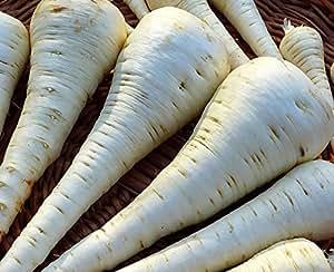 PASTINACA WHITE GEM 300 SEMI Spalla Larga Dolce Resistente Carota Bianca