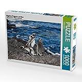 Magellan-Pinguine am Meer 1000 Teile Puzzle Quer