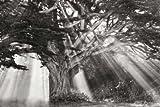 Moses Baum BANDW durch GEYMAN, witali–Fine Art Print erhältlich auf Leinwand und Papier, canvas, SMALL (24 x 16 Inches )