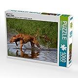 Jagdfieber 1000 Teile Puzzle quer (CALVENDO Tiere)