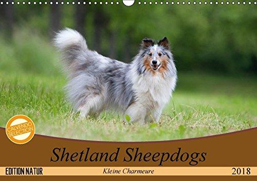 Kleine Charmeure (Wandkalender 2018 DIN A3 quer): Shelties mit besonderem Charme (Monatskalender, 14 Seiten ) (CALVENDO Tiere) ... - www.tierphotografie.com, Angela ()