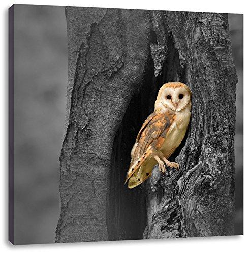 Schleiereule in der Baumhöhle B&W Detail, Format: 70x70 auf Leinwand, XXL riesige Bilder fertig gerahmt mit Keilrahmen, Kunstdruck auf Wandbild mit Rahmen, günstiger als Gemälde...