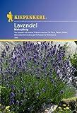 Lavendel Lavandula angustifolia mehrjährig