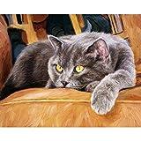 Koehope sofa Cat fai da te digitale pittura ad olio vernice da numero tela arredamento senza telaio New