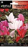 Semillas de Flores - Cyclamen de Persia flor grande variado - Batlle