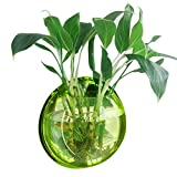 Vert Acrylique Ronde Murale Suspendue Poisson Bol Aquarium Réservoir pour Poisson D'or et Béta Végétale Plante Vase Décoration Pot, 29.5 cm Diamètre