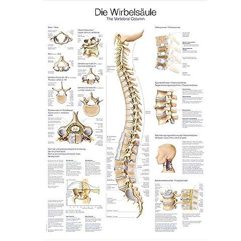 Poster Anatomie - Tableau d'enseignement anatomique la colonne vertébrale Anatomie