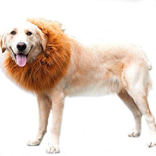 hne Perücke für Hunde Liebenswürdig PET Hat Katze Hund Kleid bis mit Ohren Funny Katze Hund Little Puppy Kostüm (Halloween Cat Kleid Bis)