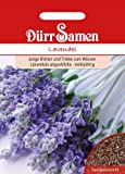 Dürr-Samen Lavendel
