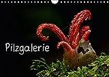 Pilzgalerie (Wandkalender 2018 DIN A4 quer): Faszinierende Pilzaufnahmen (Monatskalender, 14 Seiten ) (CALVENDO Natur) [Kalen