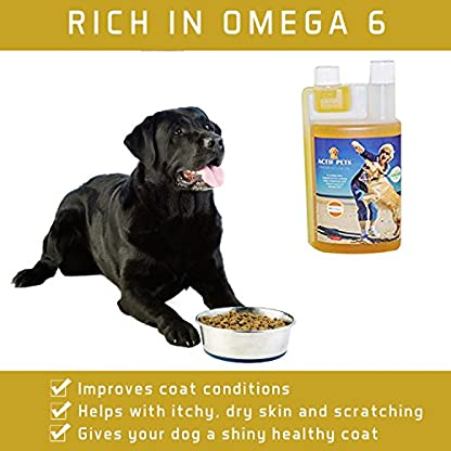 ACTIF PETS Flaxseed Oil for Dogs-Rich in Omega 3, 6 & 9 for Dry, Itchy Skin/Coat. A Natural Dog Supplement for Stiff… 3