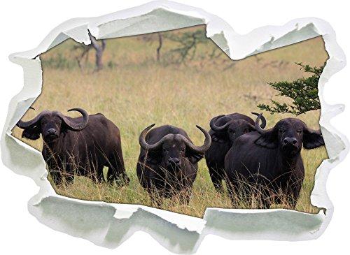 Vigile Bufalo africano Mandria, carta da parati