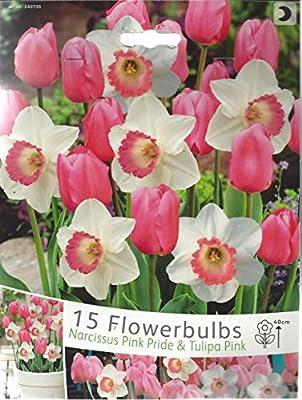"""Tulpen - Osterglocken Mischung """" Pink - Weiß """" 15 Zwiebeln von Mosselman - Du und dein Garten"""