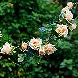 Efeu (1 Stücke X 115 Cm) Künstliche Blume Rebe Künstliche Kletterpflanze Simulation Gefälschte Blume Rattan Künstliche Garland Pflanzen Feier, Hochzeit, Küche, Party Wand-dekor, Büro (Seidentuch, Kunststoff)