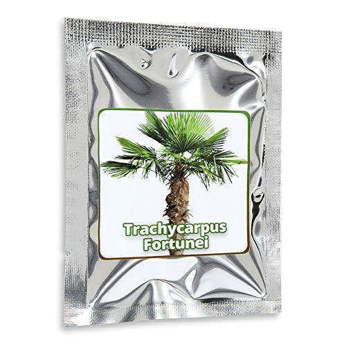 Hanfpalme Trachycarpus fortunei - Hanf Palmen Samen 10 Stück / Pack - Palmensamen - Winterhart bis -17 °C die frosthärteste Palmen weltweit