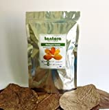 Tantora Indian Almond (Catappa) Leaves Size XL - 50 leaves (Bulk pack) 18-30cm