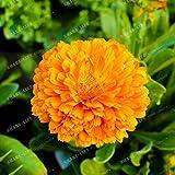 100 PCS / Semillas Paquete raro Calendula amarillos de la flor maravilla de crisol en maceta de Bonsai Plantas para jardín y balcón 1