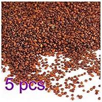 5pcs Semillas de plantas acuáticas fáciles de cultivar para decoración de peceras
