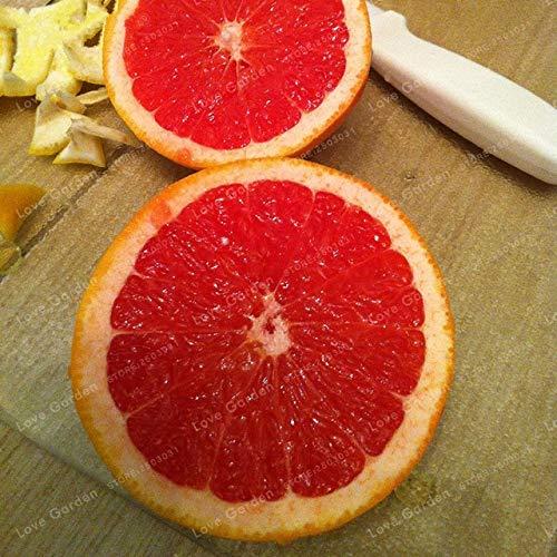 Bloom Green Co. 30 Pcs Lemon Tree Ú anche Blood Orange Organic frutta Bonsai alto tasso di sopravvivenza Bonsai rosso della calce Bonsai Healthy Food giardino della casa: 3