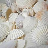 Gemini _ Mall Strandmuscheln, verschiedene Arten, natürliche Muscheln als Dekoration für Bastelprojekte, Hochzeit, Garten, Aquarium, zufällige Farben und Muster, 100g gemischt - 7