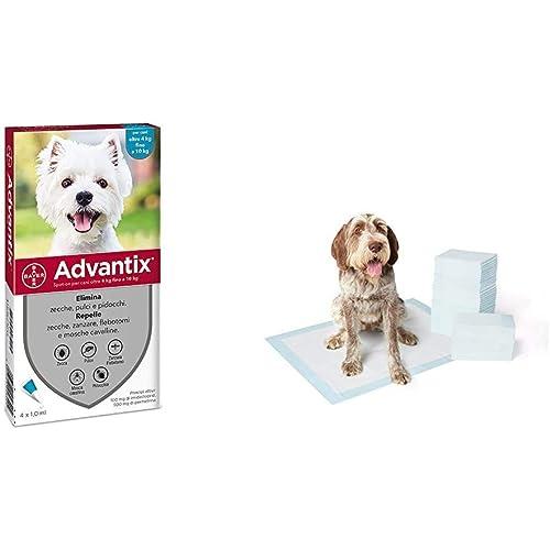 Advantix Spot-on per Cani dai 4Kg ai 10Kg - 4 pipette da 1ml & AmazonBasics Tappetini assorbenti per animali domestici, extra-large