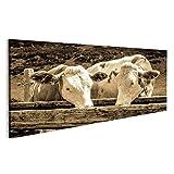 islandburner Bild Bilder auf Leinwand Kühe in Den europäischen Alpen - Foto Wandbild, Poster, Leinwandbild OFJ