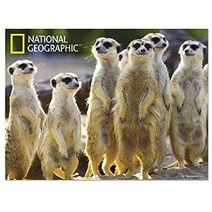 National Geographic NG28510 - Póster Infantil de Pared