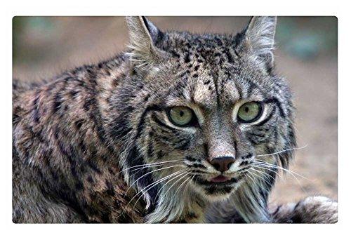 iRocket Iberian Lynx Fußmatte, 60 x 40 cm - Lynx Outdoor-küchen