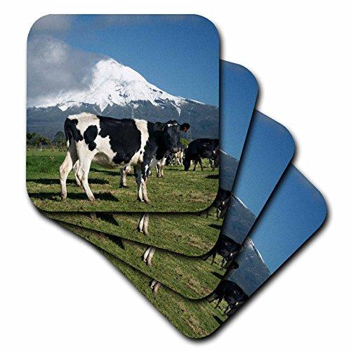 3drose-cst-71761-2-dairy-cows-farm-animals-taranaki-new-zealand-au02-dwa4998-david-wall-soft-coaster