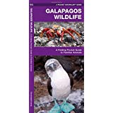 Galapagos Wildlife: A Folding Pocket Guide to Familiar Animals