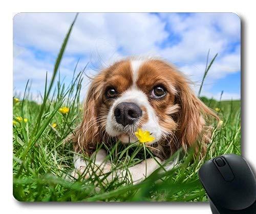 Eigene bierdeckel, die Hunde - Welpen Pet - Mousepad, Dog Green Gras -, Hunde - Gaming Mouse Pad (Welpe Gras Pad)