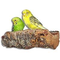 Vogelgaleria Tolles Korksitzbrett groß für Vögel | Wellensittich Kork Sitzbrett 20x10 cm als Perfektes Zubehör im Käfig | Kork Rinde ist Ein großartiges Spielzeug für Nymphensittich und Papagei