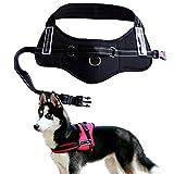 Hundegeschirr Schwarz SportsDog harness set hochwertig Brustgeschirr Powergeschirr (L:(65-82cm))