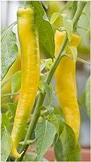 Chili Golden Cayenne Hot Pepper Samen