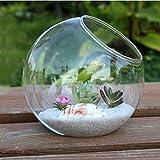 Kicode Klare Runde Glasvase Hängende Flasche Terrarium Hydroponic Container Home Tisch Hochzeit Garten Dekor 15cm