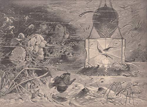 Tiefsee-grafik (Elektrizität - Fang unterseeischer Tiere mittels der elektrisch beleuchteten Tiefsee-Reuse. Ansicht auf dem Meeresboden. [Grafik])