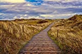 Zopix Poster Weg Dünen Sand Pfad Nordsee Gras Wandbild -