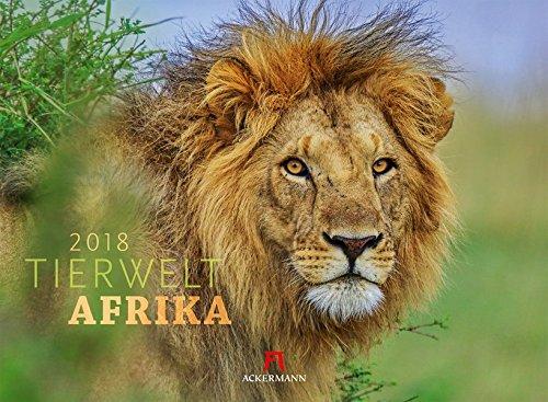 Tierwelt Afrika 2018 (Tierwelten)