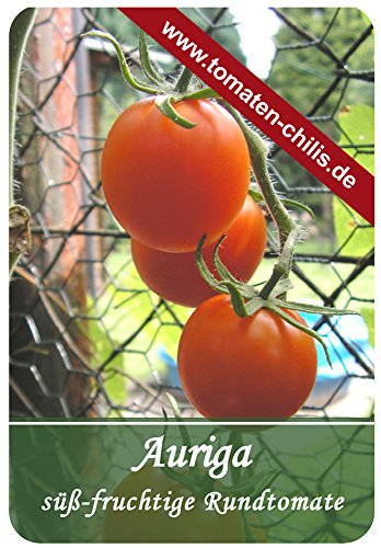 Tomaten Samen - 15 Stück - Auriga - Rundtomate