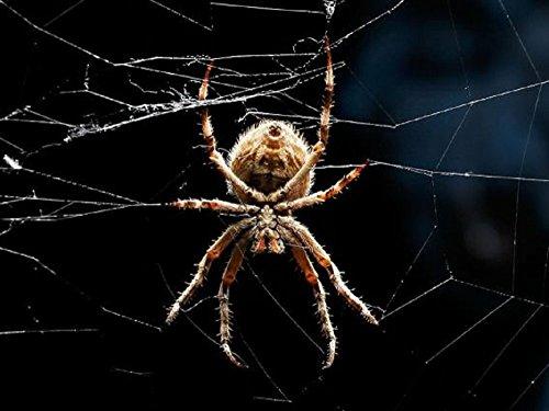 3 D Ansichtskarte Spinne Spinnen Postkarte Wackelkarte Hologrammkarte Tiere Haustiere Waldtiere