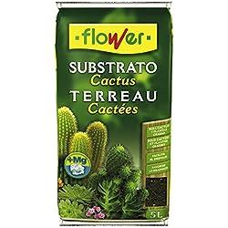Sustrato para cactus y suculentas