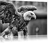 Monocrome, Adler, Format: 80x60 auf Leinwand, XXL riesige Bilder fertig gerahmt mit Keilrahmen, Kunstdruck auf Wandbild mit Rahmen, günstiger als Gemälde oder Ölbild, kein Poster oder Plakat