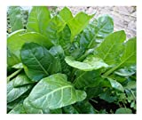 VEGETABLE SPINACH PERPETUAL 12 GRAM ~ 600 SEEDS